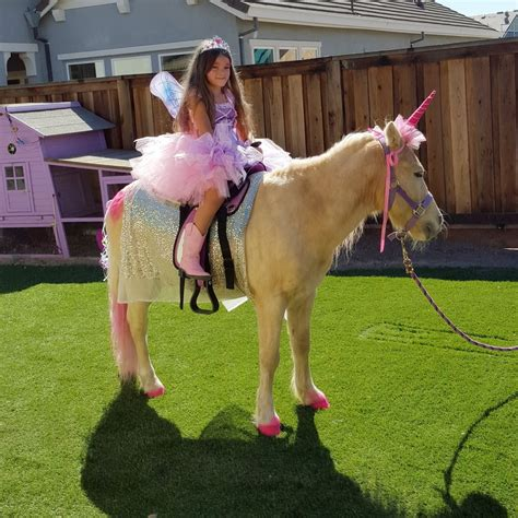 Tickle Me Pony Parties and Traveling Petting Zoo   15 ...