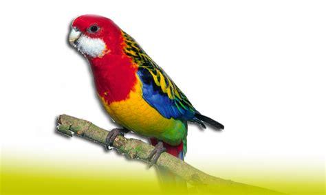 Tienda Aves   DNAT Ecosistemas.