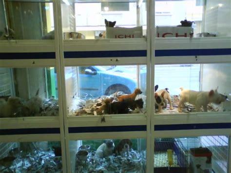 Tiendas de mascotas en California ya no podrán vender ...