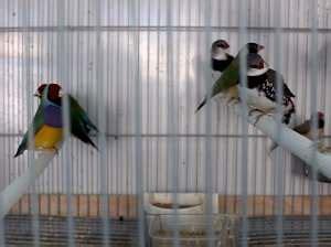 Tiendas de pájaros: hacer más fácil la vida de tu ave