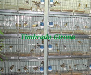 Timbrado Girona: CANARIOS EN VENTA