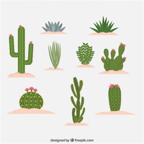 Tipo differenti di disegno cactus | Scaricare vettori gratis