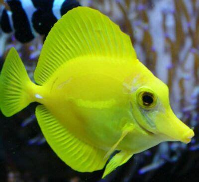 tipologia de los peces: la vida marina