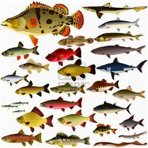 Tipos de animales: noviembre 2014