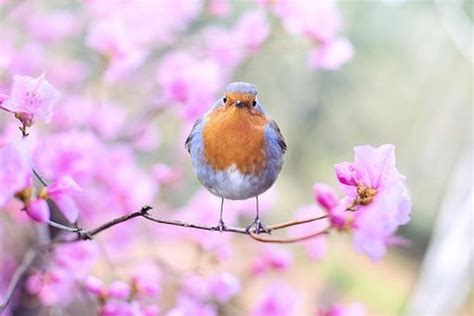Tipos de aves   ¿Cómo se clasifican?