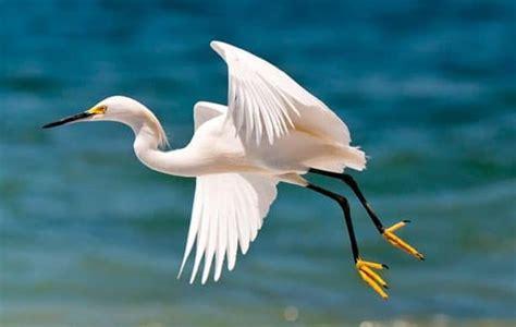 Tipos de Aves: Rapaces, Zancudas, Domésticas, Marinas y Más