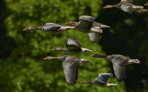 Tipos de aves   Tienda Veterinaria Blog