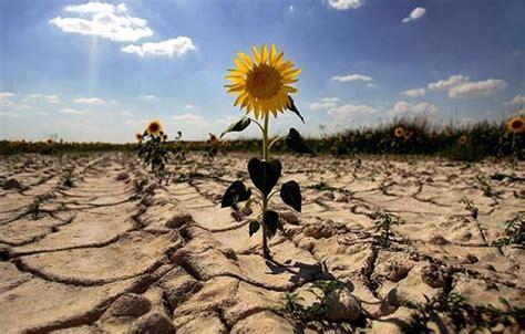 Tipos de cambio climático