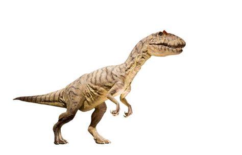 Tipos de dinosaurios carnívoros   Nombres y características