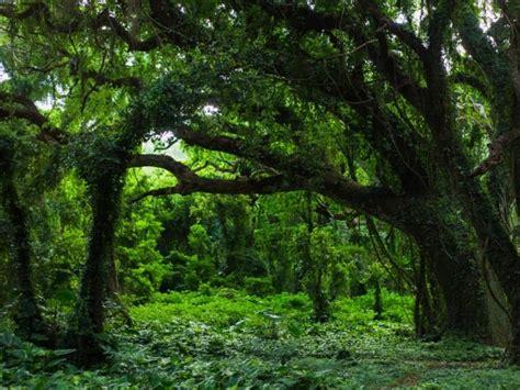 Tipos de ecosistemas terrestres: ejemplos