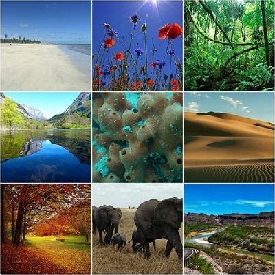 Tipos de ecosistemas y sus características   Lifeder