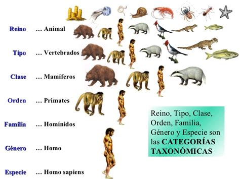 Tipos de especies