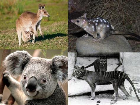 Tipos de mamíferos terrestres   ¡¡RESUMEN COMPLETO!!