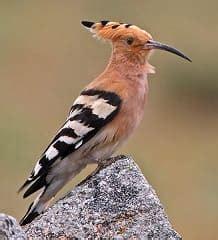 Tipos de picos de las aves. Adaptación evolutiva del pico ...