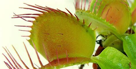 Tipos de plantas carnivoras   Plantas para.com