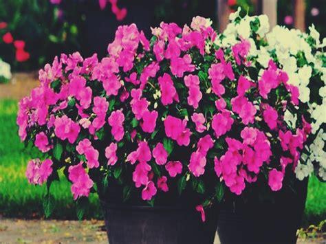 Tipos de plantas ornamentales y su definición.