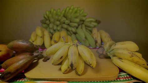 Tipos de plátanos y sus propiedades   YouTube