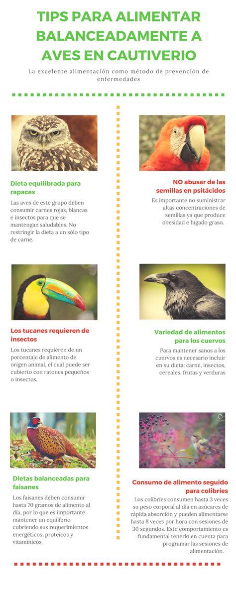 TIPS PARA ALIMENTACIÓN DE AVES EN CAUTIVERIO   Instituto ...