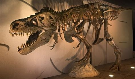 Tiranosaurio Rex   Fotos, Hechos y Historia | Dinosaurios