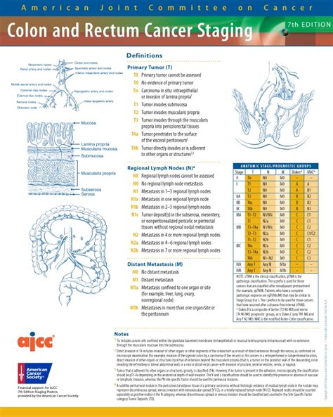 TNM / Estadiaje: Cáncer de Colon y Recto   Radiología HCM