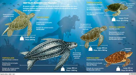 Todas las especies de tortugas marinas en Chile arriesgan ...