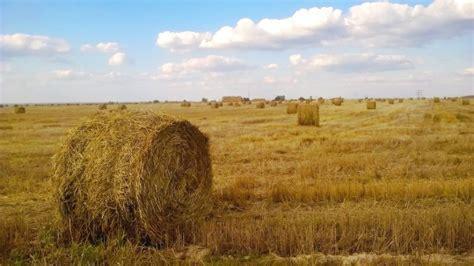 Todo sobre la agricultura de subsistencia   Agroptima