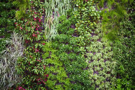 Todo sobre los muros vegetales
