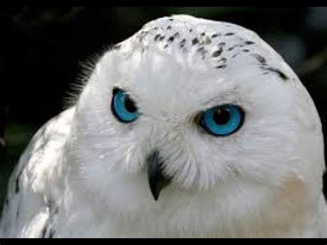 Top 10 animales mas bonitos del mundo   YouTube