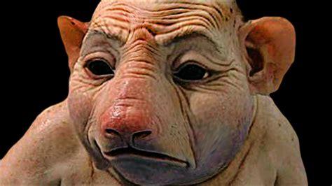 Top 10 Animales Que Han Sido Creados Por El Hombre ...