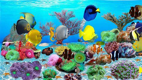 Top 10 Best Live Aquarium Fish Screensaver   Best of 2018 ...