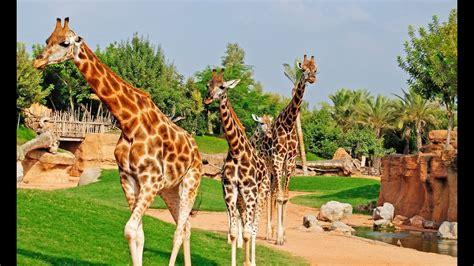 Top 10 Best Zoos In Europe   YouTube