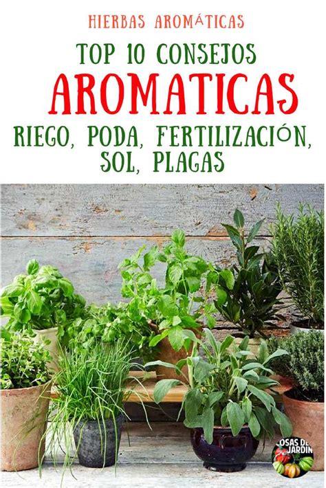 TOP 10 consejos para cultivar plantas aromaticas en maceta ...