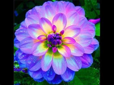 Top 10 Flores Más Hermosas Pero Extrañas en el Mundo ...
