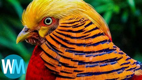 Top 10 Most Stunningly Beautiful Birds in the World   YouTube