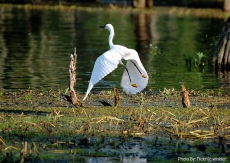 Top 10 Things for Families to do in Louisiana with Kids ...