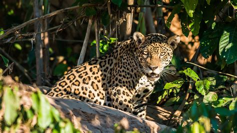 Top 10 Wildlife to Spot in the Amazon