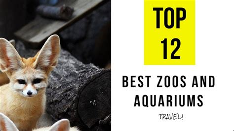 TOP 12. Best Zoos and Aquariums in Louisiana   YouTube