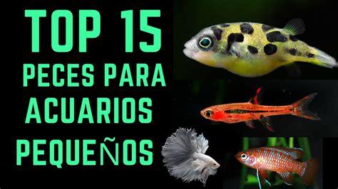 TOP 15 Peces para acuarios pequeños   10L   40L     YouTube