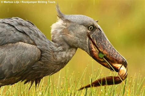Top 25 Wild Bird Photographs of the Week #51 – National ...