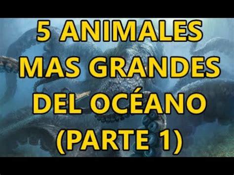 Top 5 animales mas grandes del océano   parte 1     YouTube