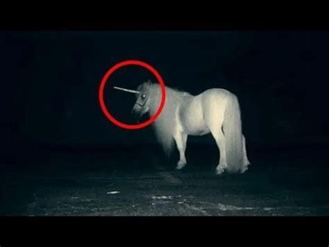 Top 5 Unicornios Reales Captados en Camara   YouTube
