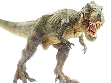 Top 60 Tyrannosaurus Rex Stock Photos, Pictures, and ...
