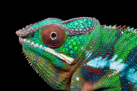 Top Characteristics Of Reptiles That Were Here In Our ...