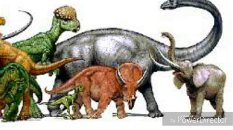 Top dinosaurios herbívoros   YouTube
