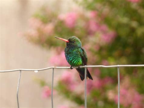 TOP: Los pájaros más lindos de la capital argentina