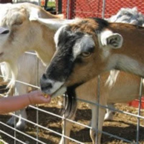 Top Petting Zoos Near Me  with Free Quotes  | GigSalad