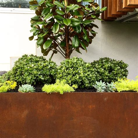 Top Ten Balcony Plants That Look Awesome
