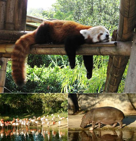Top Zoos in Europe   All About TravellingAll About Travelling