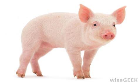 TOP10: ¡Los animales más inteligentes del mundo! ¡No están ...