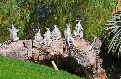 Tourism Community: Bioparc Valencia entre el 10% de ...